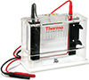 Thermo Scientific P81